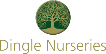 Dingle Nurseries - Coming Soon Page